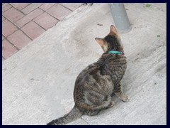 There are many stray cats and cat's of store owners that live inside the stores of  Sai Ying Pun and Sheung Wan. Charming, but not the most hygienic feature since they also sometimes sleep on the dried food!