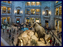 Museum_of_Natural_History_rotunda